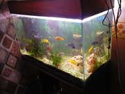 Продам аквариум в Новокузнецке