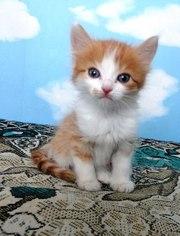 Котенка 1, 5 месяца