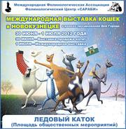 Международная выставка кошек в День Города в Новокузнецке!