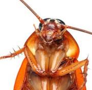 Как избавиться от клопов,  тараканов.